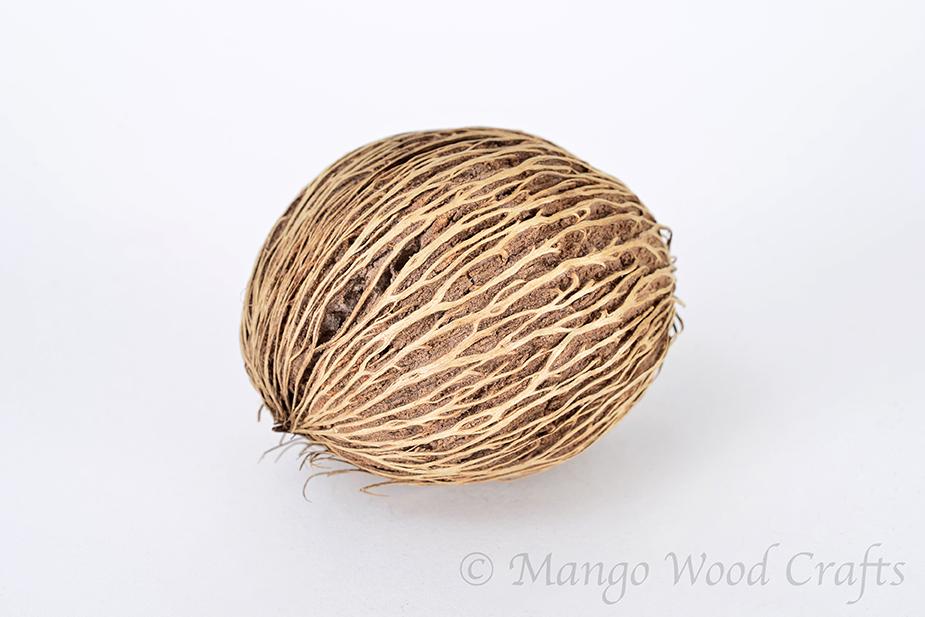 Palm Seed